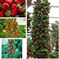 Higarden,NON-GMO organic strawberry Strawberry Fruit climbing plant seeds home garden 200 Red unit