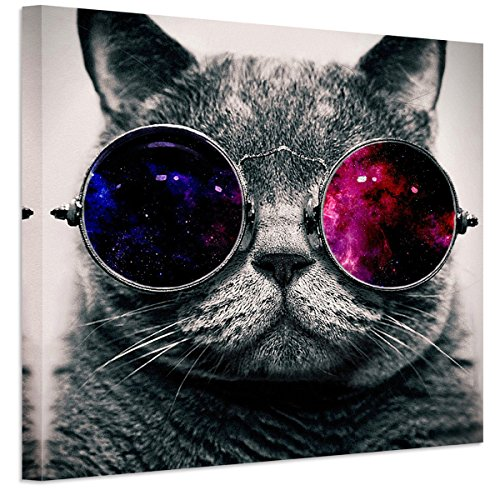 RAIN QUEEN Animals Canvas Wall Art, Modern Cool Glasses Cat