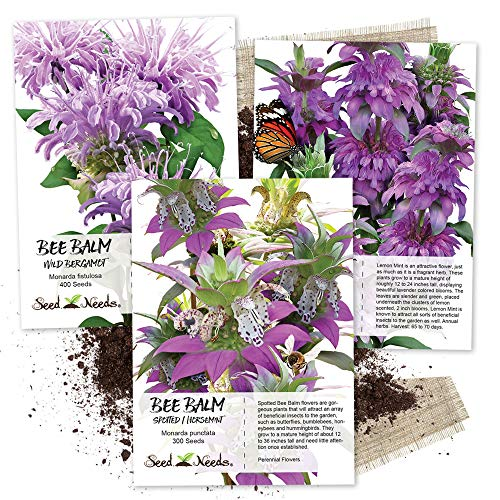 Seed Needs, Bee Balm Seed Collection (3 Individual Packets) Untreated Seeds - Herb Bergamot