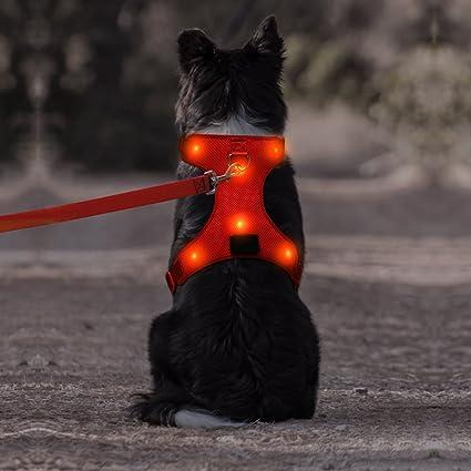 61jj%2BqSX5DL._SX425_ amazon com domi led dog harness, usb rechargeable reflective pet