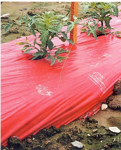 Red Mulch - Garden - Plastic Film - 4ft. X 600ft. 1.0 Mil Embossed By Grower's Solution