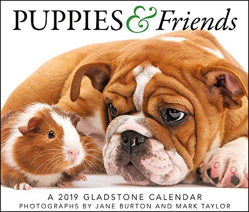 2019 Puppies & Friends Desk Calendar (Calendar Friends)