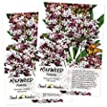 Seed Needs Pink Common Milkweed Seeds For Planting Asclepias Syriaca Twin Pack Of 100 Seeds Each Untreated