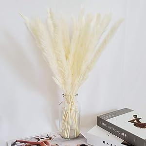 Natural Dried Pampas Grass 30 Stems -20