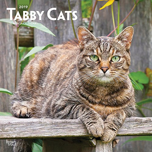 (Tabby Cats 2019 12 x 12 Inch Monthly Square Wall Calendar, Animals Cats (Multilingual Edition))