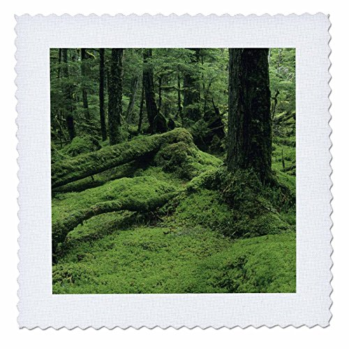 3dRose qs_87576_2 Alaska, Tongass National Forest, Rainforest - US02 KSC0030 - Kevin Schafer - Quilt Square, 6 by 6-Inch