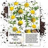 Seed Needs, German Chamomile (Matricaria recutita) 500 Seeds Non-GMO