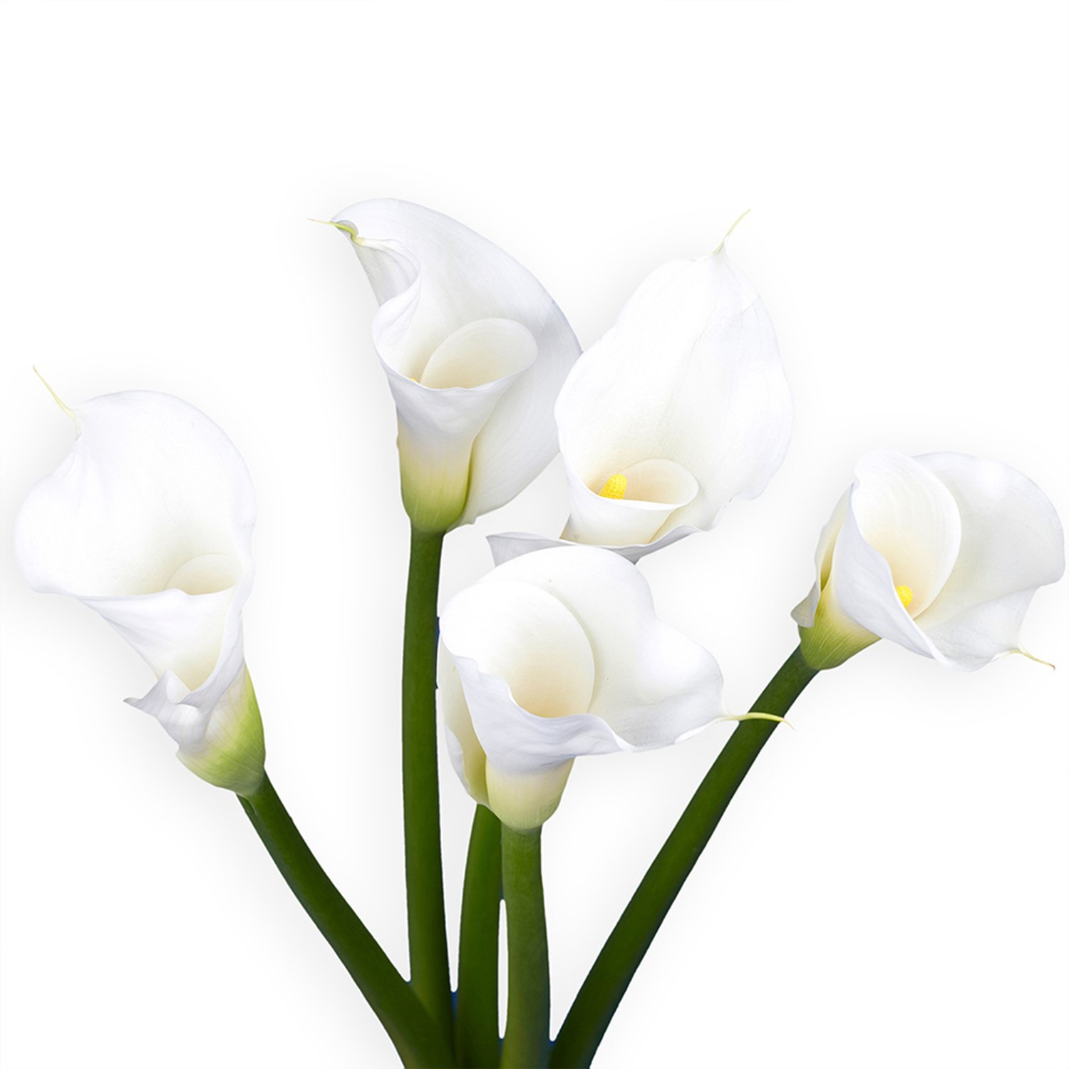 Amazon globalrose 36 fresh open cut white calla lilies fresh amazon globalrose 36 fresh open cut white calla lilies fresh flowers for birthdays weddings or anniversary fresh cut format lily flowers izmirmasajfo