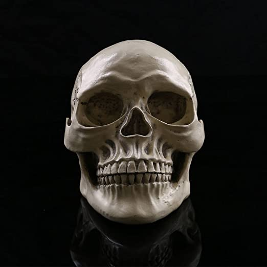Tinksky Lifesize 1 1 Human Skull Model Replica Resin Medical Anatomical Tracing Skeleton With Movable Teeth Halloween Decorations Toys Games Amazon Com