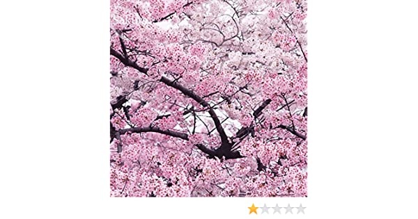 Amazon giant japanese pink cherry blossom sakura tree 20 amazon giant japanese pink cherry blossom sakura tree 20 seeds oriental sweet prunus flower seeds e3752 garden outdoor mightylinksfo