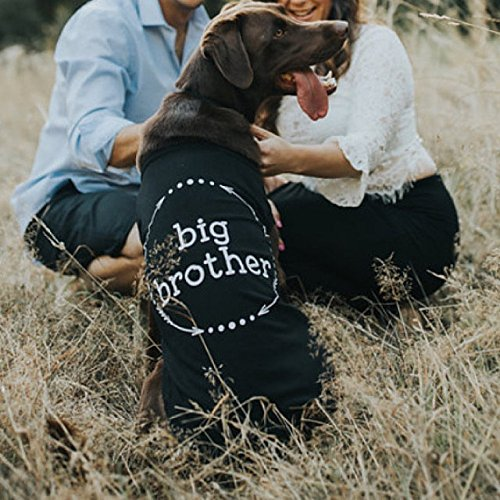 Big Brother Dog Shirt by Pink Papyrus Co.