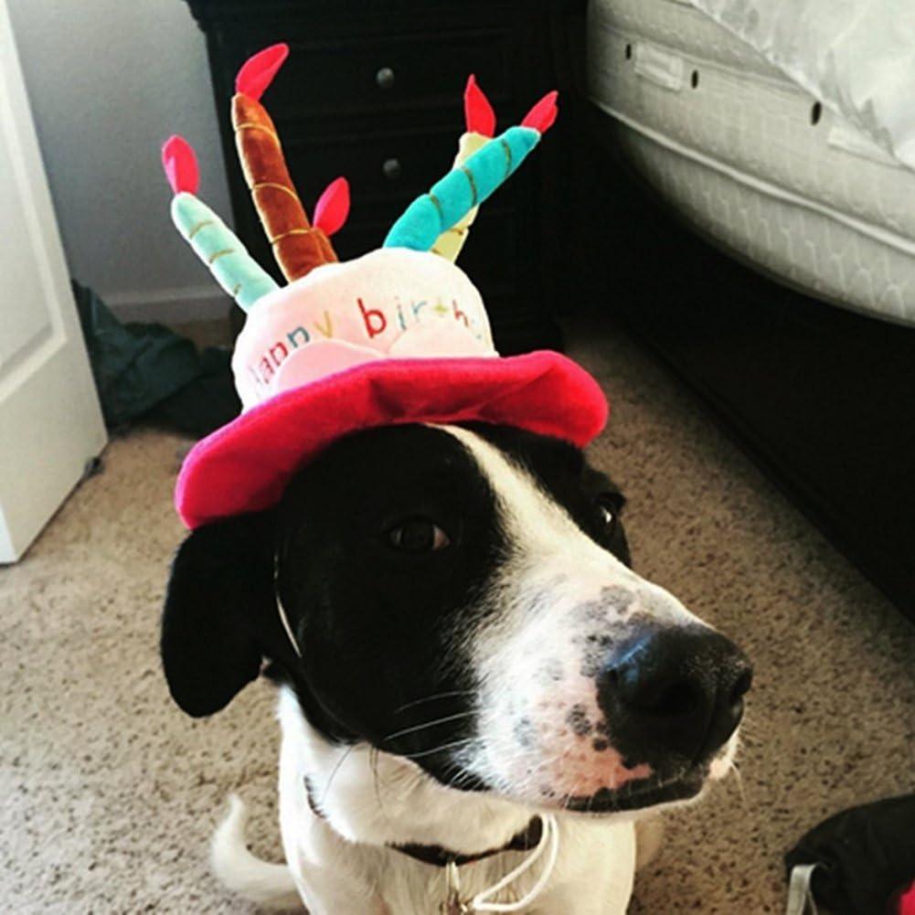 Comprar gorros para perros