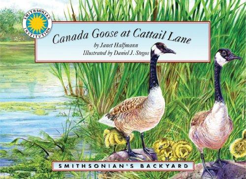 Canada Goose at Cattail Lane