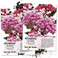 Seed Needs Pink Swamp Milkweed Seeds For Planting Asclepias Incarnata Twin Pack Of 100 Seeds Each Untreated