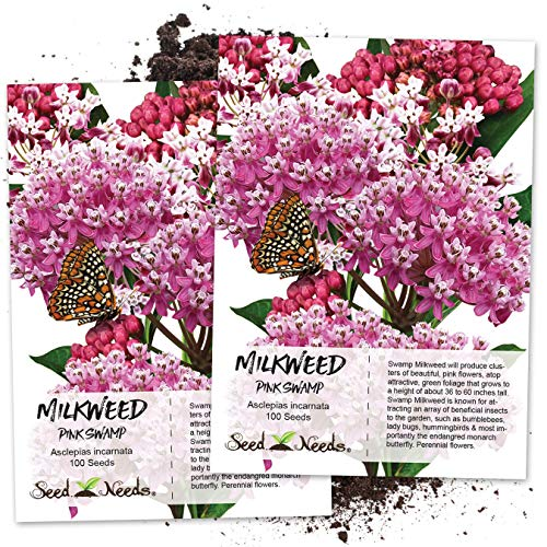 - Seed Needs, Pink Swamp Milkweed (Asclepias incarnata) Twin Pack of 100 Seeds Each Untreated