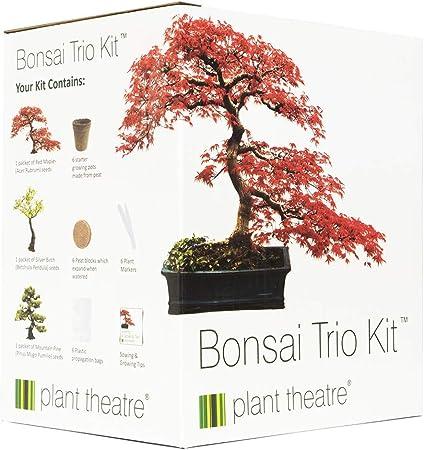 Kit Bonsai Plante Graines A Planter Ensemble 3 Bonsai Arbre Plante Interieur Grow Set Bonzai Plante Cultivez Bonsai Kit Pret A Pousser Graine Bonsai Pour Jardin Interieur Idees Cadeaux Jardinage