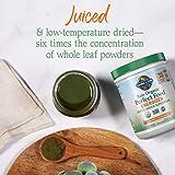Garden of Life Raw Organic Perfect Food Energizer