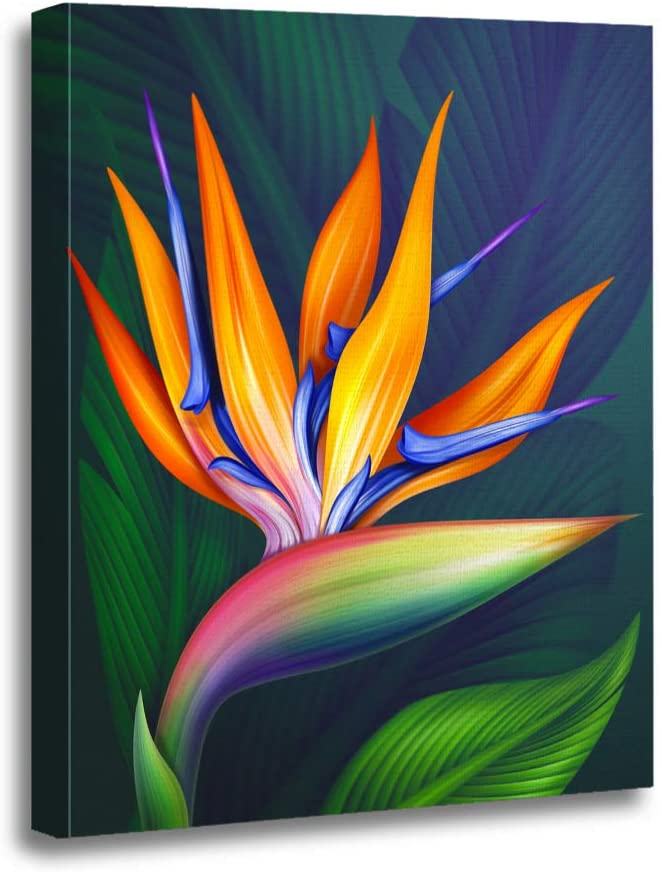 Amazon Com Ansouyi 16x20 Inches Canvas Wall Art Painting Colorful Strelitzia Bird Of Paradise Exotic Flower Botanical Green Home Decorative Artwork Prints Posters Prints
