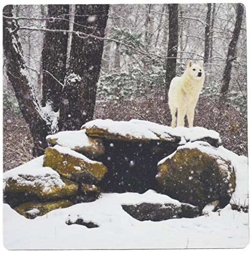 3dRose LLC 8 x 8 x 0.25 Inches Mouse Pad, Arctic Wolf 2 (mp_100274_1) (Arctic Wolf Rests)