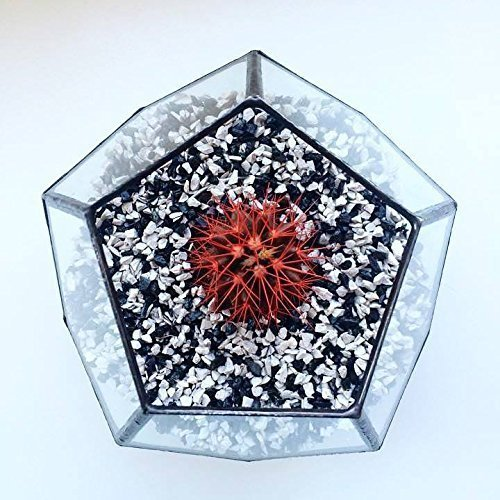 Large Terrarium Dodecahedron, Stained glass vase, Planter for indoor gardening, Geometric terrarium, Stained glass dodecahedron