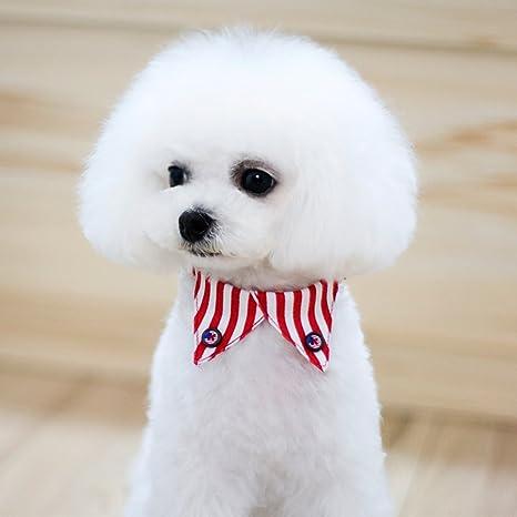 Baoblaze - Collar Decorativo de Corbata para Perro o Gato: Amazon ...