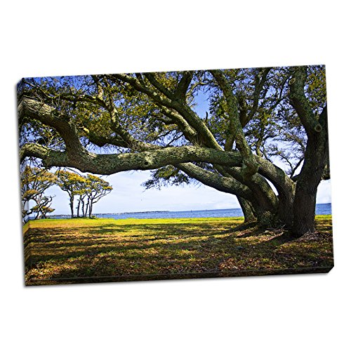 Live Oaks By The Bay Ii  Fine Art Photograph By  Alan Hausenflock  One 36X24in Hand Stretched Canvas