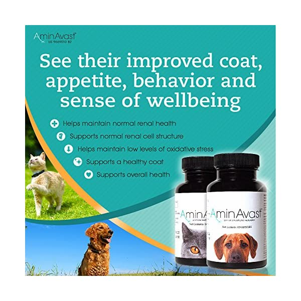 AminAvast Kidney Support Supplement for Cats and Dogs, 300mg - Promotes and Supports Natural Kidney Function - Supports Health and Vitality - Easily Administered - 60 Sprinkle Capsules 3
