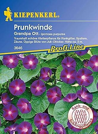20 Pflanzen Kiepenkerl Saatgut Prunkwinde