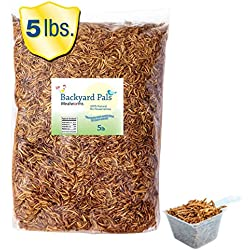 Bulk Mealworms Dried FDA Approved Chicken Treats for Birds and Reptiles, Giant Worms Are Perfect High Protein Food For Every Season