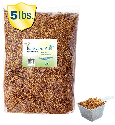 dried-mealworms-in-bulk-with-bonus-scoop-5-lbs-fda-approved-chicken-feed-also-great-for-birds-and-re