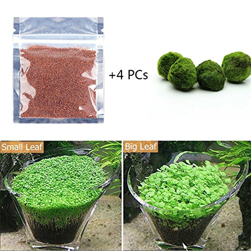 Seed Ornament - Homedeco Aquarium Glossostigma Hemianthus Callitrichoides Seeds Water Grass Easy Aquatic Live Plant Fish Tank Decoration Landscape Ornament (1 Bag seeds+4 PCs Moss Balls, Small Leaf)