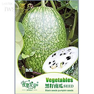 Heirloom Malabar Gourd Seeds Original Pack 8 Seeds Fig