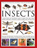 The Illustrated World Encyclopedia of Insects: A Natural History and Identification Guide to Beetles, Flies, Bees, wasps, Springtails, Mayflies, ... Crickets, Bugs, Grasshoppers, Fleas, Spide