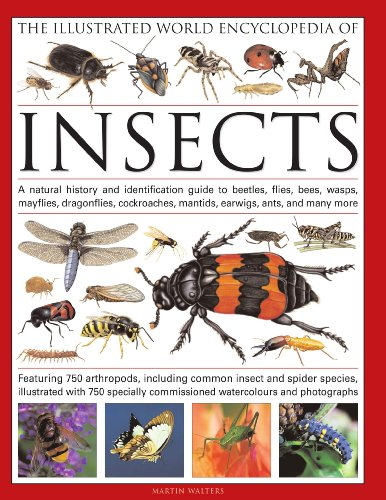 The Illustrated World Encyclopedia of Insects: A Natural History and Identification Guide to Beetles, Flies, Bees, wasps