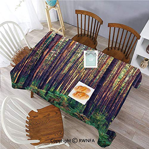 55x86 inch Polyester Tablecloth for Oblong Table Forest in The Morning Light Tall Trees Trunks Greenery Natural Environment Picture Family Gatherings,Parties,Wedding Dinner Kitchen Table,Green Brown