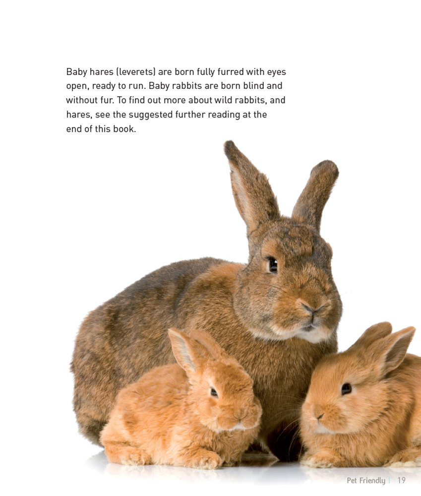 Dwarf Mini Rabbit Pet Friendly Understanding And Caring For