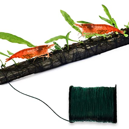 68538425c73d5 SunGrow Biodegradable Moss Cotton Thread - Natural Plant String Dissolves  Leaving Moss and Ferns Anchored to Rocks and Driftwood - 65 feet Long Dark  ...