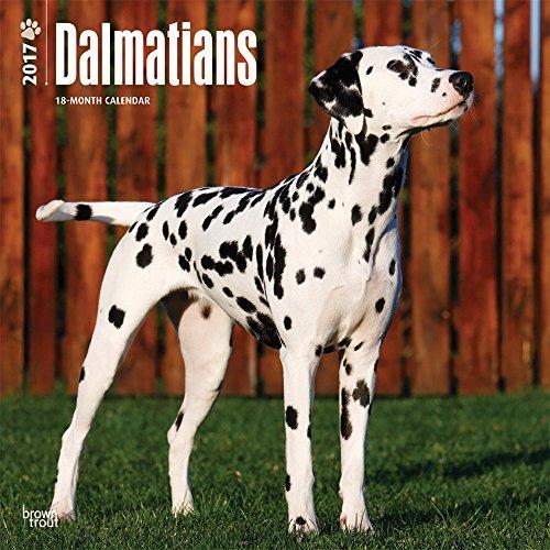 2017 Monthly Wall Calendar - Dalmatians