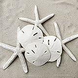 Tumbler Home Set of Starfish and Sand Dollars - 3 Finger Starfish 4 to 6 inch and 3 Sand Dollars 3 to 3.5 inch - Beach Decor