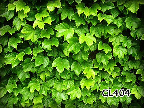 lb-7x5ft-spring-greenery-vinyl-photography-backdrop-customized-photo-background-studio-prop-cl404