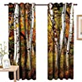 TheresaDewey Decor Curtains by Fall Decor,White Fall Birch Trees with Autumn Leaves Growth Wilderness Ecology Calm View,Multicolor,Wide Blackout Curtains, Keep Warm Draperies, Set of 2
