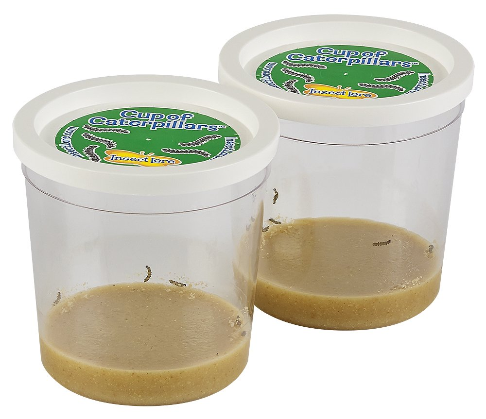 Insect Lore Live Cup of 10 Caterpillars to Butterflies - Butterfly Growing Kit REFILL - SHIP NOW by Insect Lore