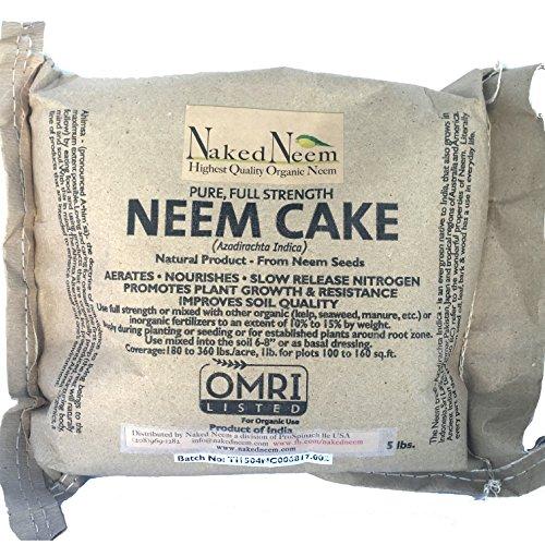 Neem Plant - 9