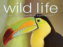 Wild Life Season 1