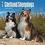 Shetland Sheepdogs - 2017 Calendar 12 x 12in