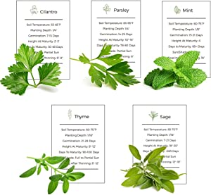 Environet Herb Garden Seeds Collection - 5 Culinary Herb Seeds Pack - Mint, Parsley, Cilantro, Thyme and Sage Seeds, Heirloom Seeds for Planting