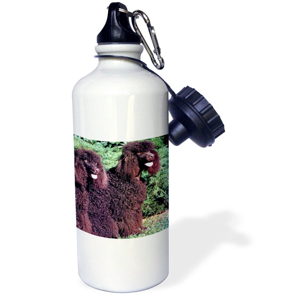 3dRose wb_991_1 Irish Water Spaniel Sports Water Bottle, 21 oz, White 1