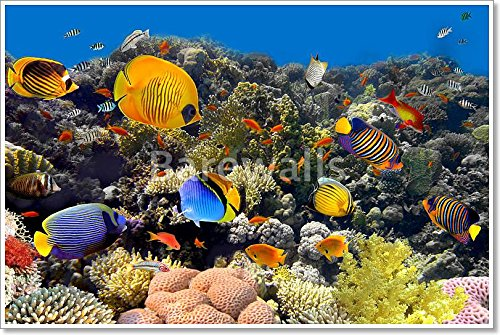 Coral And Fish Paper Print Wall Art (36in. x 54in.)
