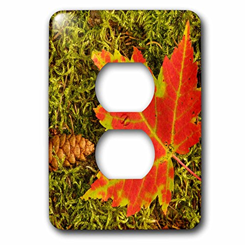 nt - Botanical - Maple leaf and pine cone on moss, Upper Peninsula, Michigan. - Light Switch Covers - 2 plug outlet cover (lsp_259490_6) ()
