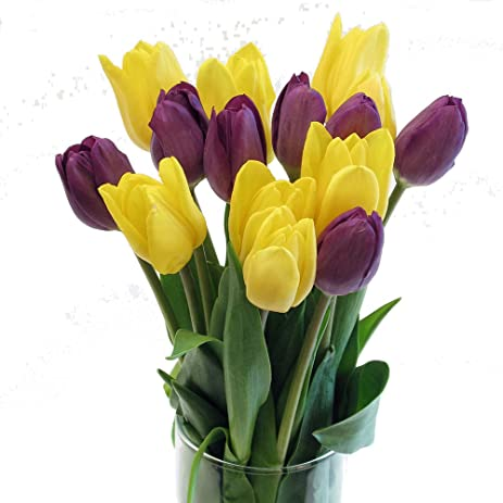 Amazon stargazer barn fall favorites purple yellow tulips stargazer barn fall favorites purple yellow tulips with hobnail style glass vase yellow mightylinksfo